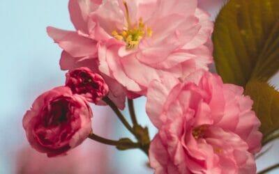 Uitbundig bloeiende boom